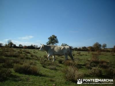 Senderismo Sierra del rincón- Sierra de Madrid; Caminar rápido